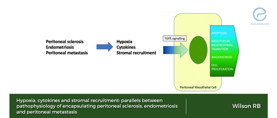 Analogous pathways of  peritoneal tumor wound healing and endometriosis.