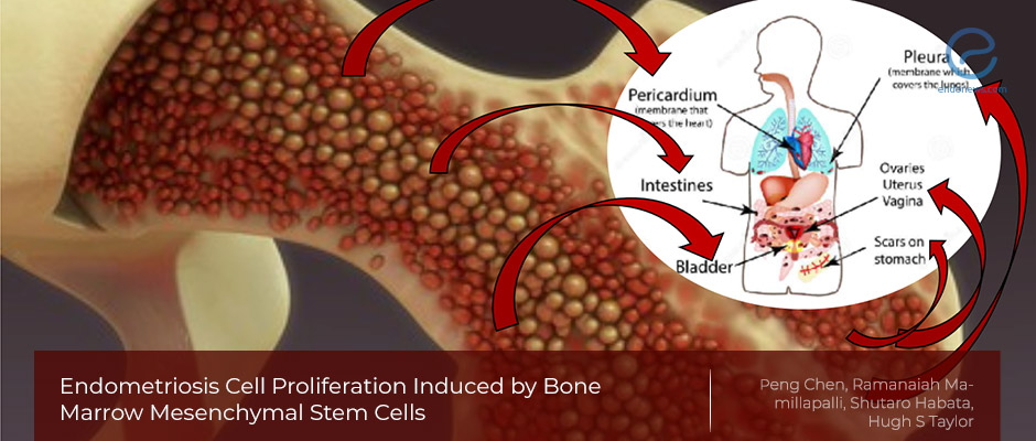 Woof Woof – Bone marrow cells are coming