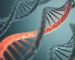 Genetic Variations May Link Risk of Endometriosis and Ovarian Cancer